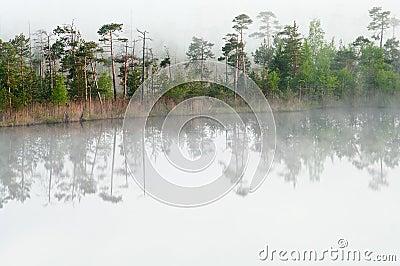 Wood lake coast in a fog