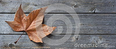 Wood Leaf Banner Background