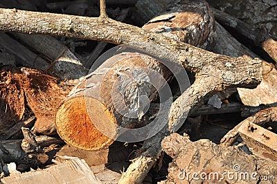 Wood Log Timber Stick