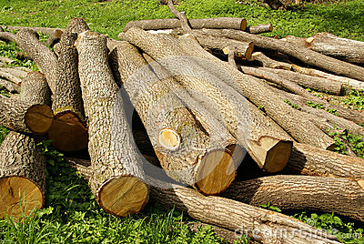 Wood logging logs