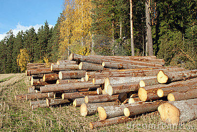 Wood Logs at Edge of Autumn Forest