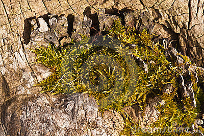 Wood with moss