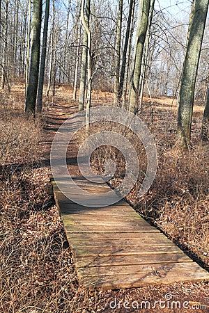 Park Trail with Bridge