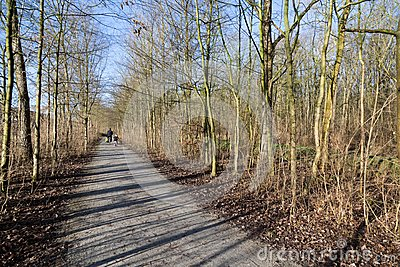 Wood path with cyclists in early spring