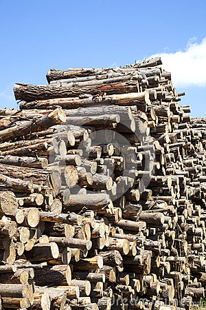 Wood piled