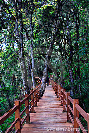 Free Wood Plank Road Through The Forest Royalty Free Stock Image - 9444926
