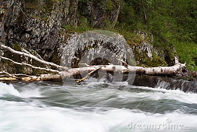 Wood in river