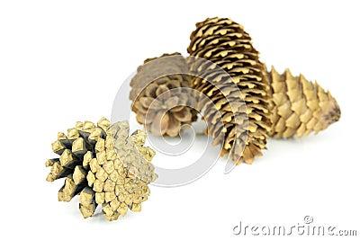 Wood s pine cones