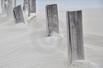 Wood in the sand