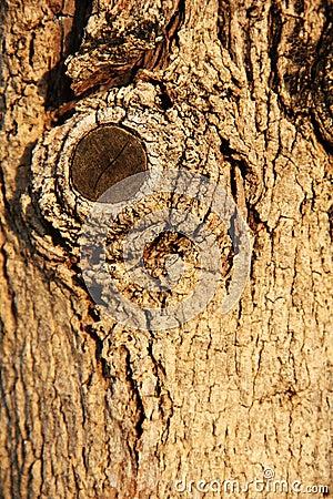 Wood seamless pattern