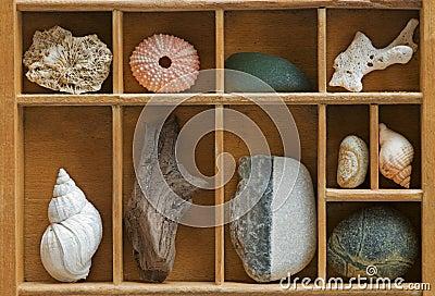 Wood Showcase with Seashells