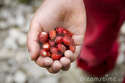 Wood strawberries