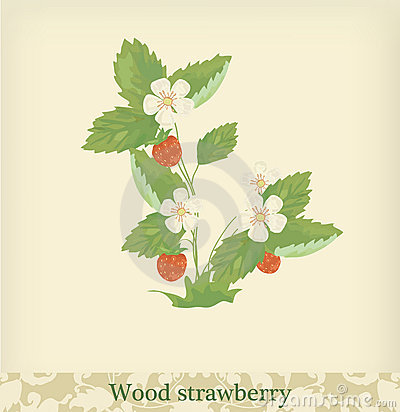 Wood Strawberry