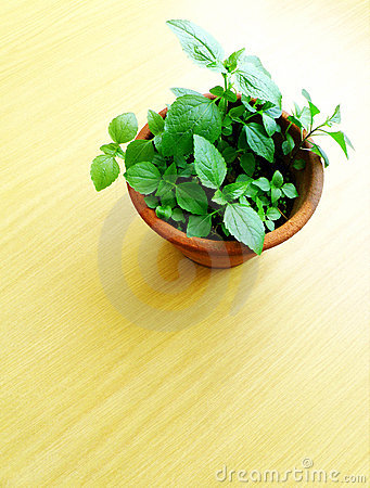 Wood table top and potted green plant