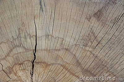 Wood texture close up