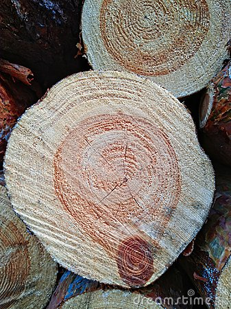 Free Wood Texture Of Cut Tree Trunk. Stock Photography - 109578892