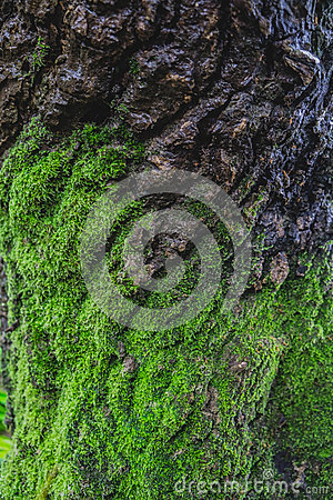 Free Wood Textured With Green Moss Royalty Free Stock Photo - 58458045