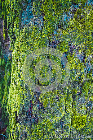Free Wood Textured With Green Moss Stock Images - 58458194