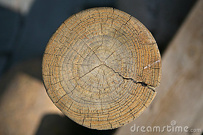 Wood tree rings