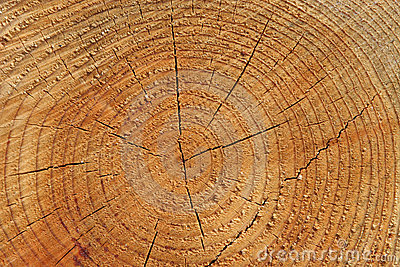 Wood Tree Rings Background
