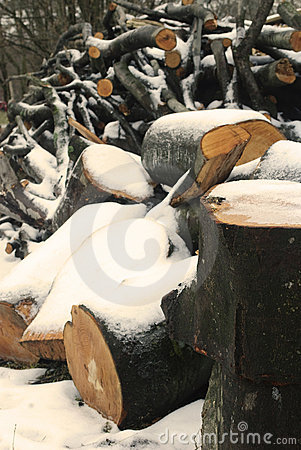Wood under the snow