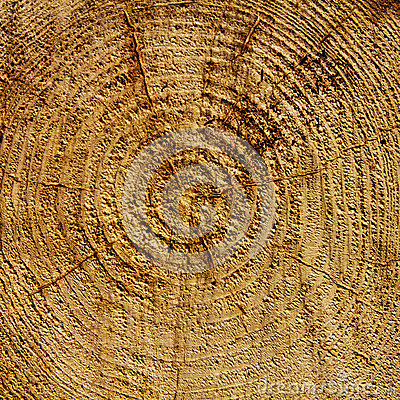 Wood years circles