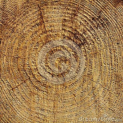 Wood years circles