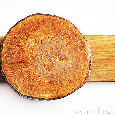Free Woodden Annual Growth Ring Stock Photo - 11656760