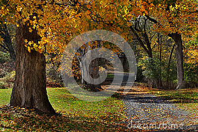 Wooded Autumn Path