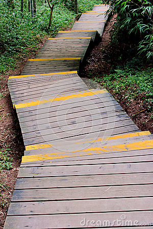 Wooden access in forest