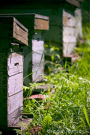 Wooden beehives