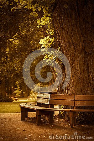 Free Wooden Bench In Park Royalty Free Stock Photos - 33326348