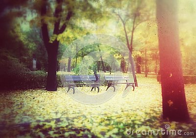 Wooden benches in autumn park
