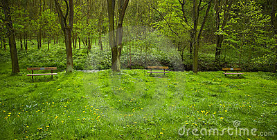 Wooden benches standing on the lawn