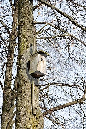 Wooden Birdhouse on Tree