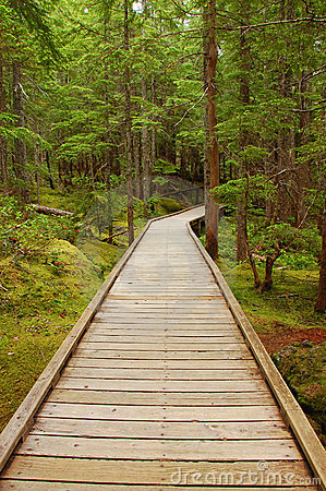 Wooden boardwalk
