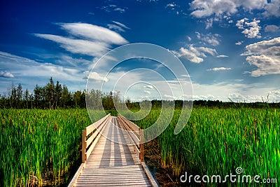 Wooden Boardwalk Cuts Through Marsh