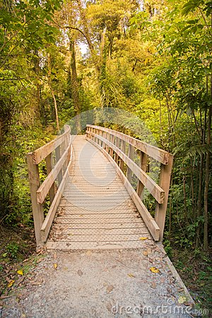 Free Wooden Boardwalk In Tropical Forest, New Zealand Royalty Free Stock Photos - 108579918