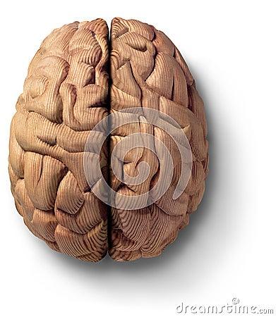 Free Wooden Brain Stock Photo - 595570