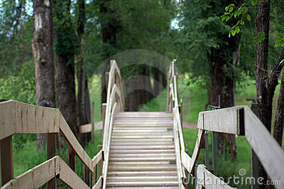 Wooden bridge in a forest