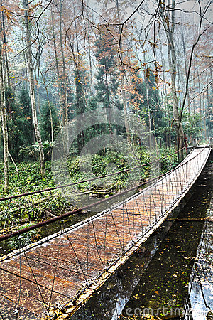 Wooden bridge in the forest