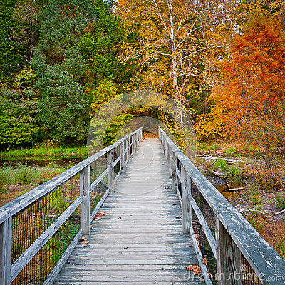 Free Wooden Bridge Over Creek In Autumn Forest. Stock Image - 45688781