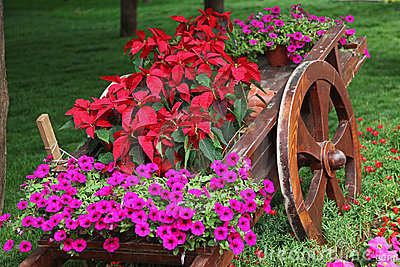Wooden cart full of colorful flowers