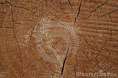 Wooden circle with a split cuts