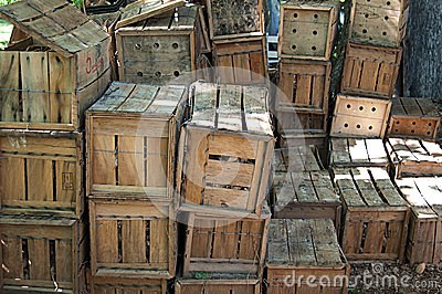Wooden Crates Filled with Flower Bulbs