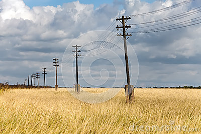 Wooden electric pillar in the field