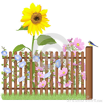 Wooden fence, flowers and blue tit