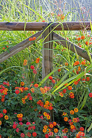 Wooden fence surrounded by colorful flowers