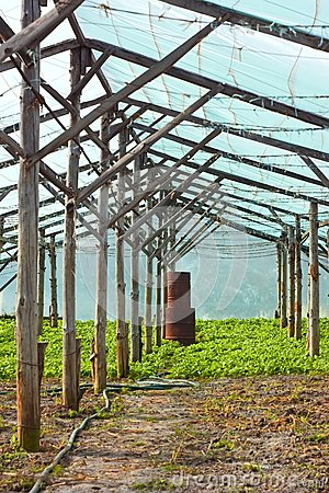 Wooden film greenhouse after harvest