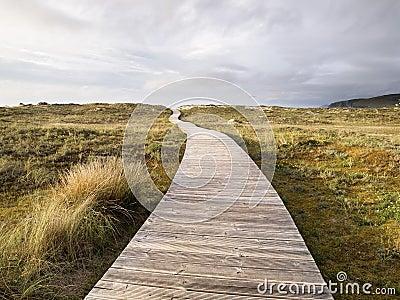 Wooden footbridge in a meadow